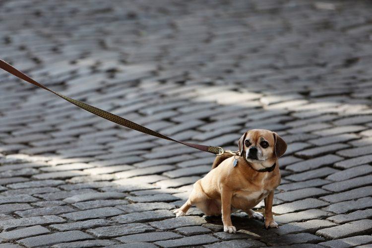 Smycz dla psa. Jak wybrać?