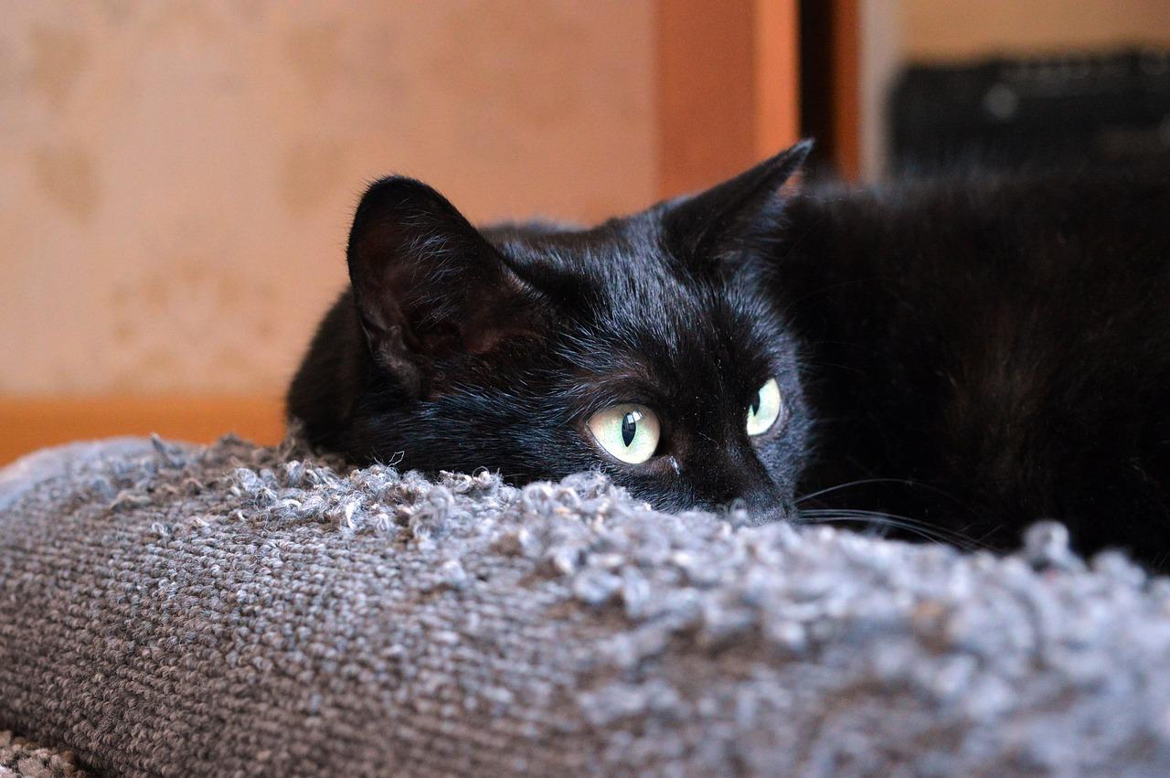 W poszukiwaniu idealnego drapaka dla kota